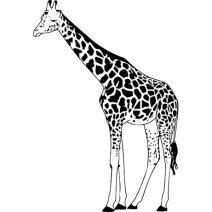 Zsiráf falmatrica