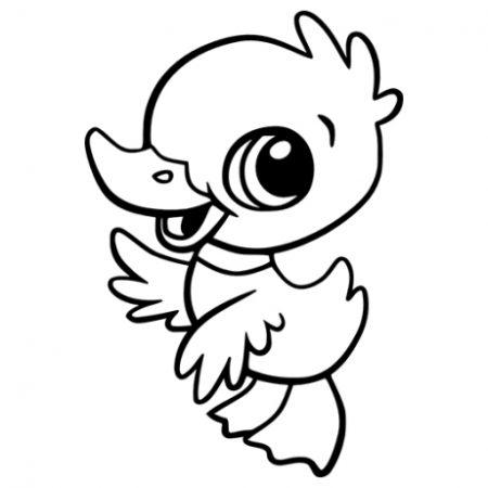 Kiskacsa falmatrica
