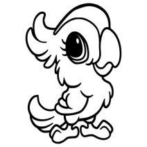 Papagáj falmatrica